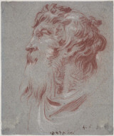 Head of a Bearded Man Looking to the Left