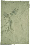 Drapery and Hand (recto)