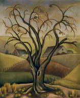 Bois d'Arc Tree