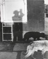 Untitled (shadowed image with dog)