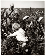 Untitled (Little girl picking cotton), Buttonwillow, California