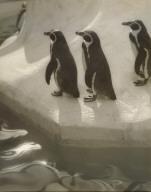 Penguins Three