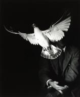 Rising Dove