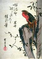 Untitled (Golden Pheasant on Rock)