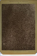 Surface of the Sun from the Observatory at Meudon on 9 September 1883 at 8:50:20 a.m.