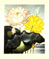 The Sacred Egyptian Bean, from the book The Temple of Flora or Garden of Nature