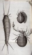 Scheme XXXIII, thirty-third plate, opposite page 207 in the book, Micrographia: or some physiological Descriptions of minute Bodies made by Magnifying Glasses. With Observations and Inquiries thereupon (London: printed by Jo. Martyn and Ja. Allestry, printers to the Royal Society, 1665)