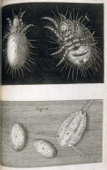 Scheme XXXVI, thirty-sixth plate, opposite page 214 in the book, Micrographia: or some Physiological Descriptions of Minute Bodies made by Magnifying Glasses. with Observations and Inquiries thereupon (London: The Council of the Royal Society of London for Improving of Natural Knowledge, 1665).