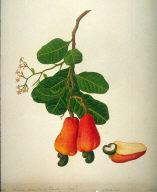 One Botanical Study