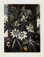The Blue Passion Flower, from the book The Temple of Flora or Garden of Nature