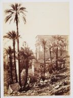 Group of Palms, Island of Philae