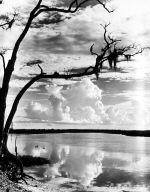 Weeks Bayou at Weeks Island, Louisiana