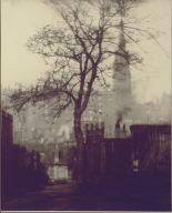 A Tree in Greyfriars Churchyard, Edinburgh