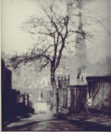 A Tree in Greyfriars