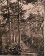 Path in the woods with figures posing