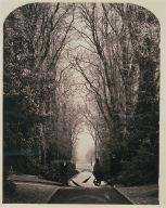 Avenue at Weston, Warwickshire