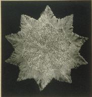 Tr. Sec. Spine of Echinus. X55