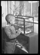Boy Viewing Fishtank
