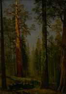 The Grizzly Giant Sequoia, Mariposa Grove, California