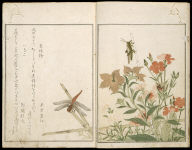 Picture Book of Selected Insects