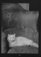 Schermerhorn cat, portrait photograph