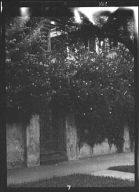 Gate in a free-standing wall covered with flowering vines, New Orleans or Charleston, South Carolina