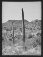 Travel views of the American Southwest