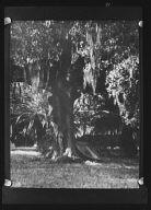 Duelling oak, New Orleans