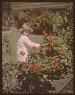 Child standing beside flowers in a garden