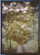 Two men walking along a road through woods