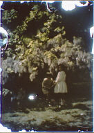 Two children standing under a flowering tree