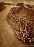 Daisy Trail