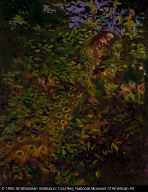 Peacock in the Woods (study for book, Concealing-Coloration in the Animal Kingdom)