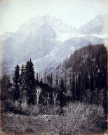 [tall trees and rocky mountains]