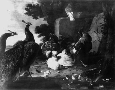 Barnyard Fowl and Peacocks