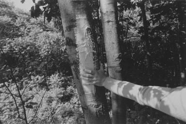 Untitled - (Hand w/ Tree, New York)