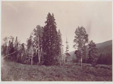 Munger's Trees, Upper Bear River, Uintah