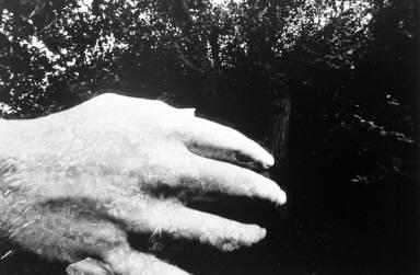Hand, Rochester, NY