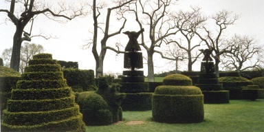 Bare Trees and Topiary, Longwood Gardens, Kennett Square, Pennsylvania