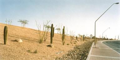 Highway Cactus Planting, Tucson, Arizona
