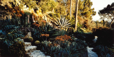 Tim Curry's Garden, East View, PM, Hollywood, California