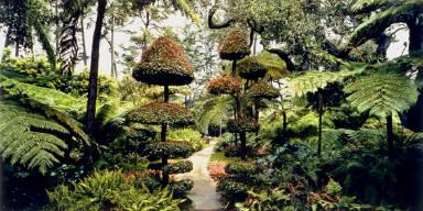 Fern Garden with Tpoiary, Lotusland, Montecito, California