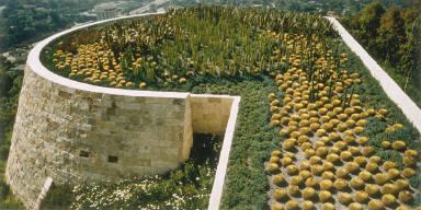 Cactus Garden, J. Paul Getty Center, Los Angeles, California