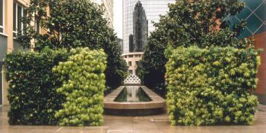 Podocarpus Cubes, MOCA Plaza, Los Angeles, California