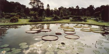 Water Lilies, Kenilworth Aquatic Gardens, Washington, D.C.