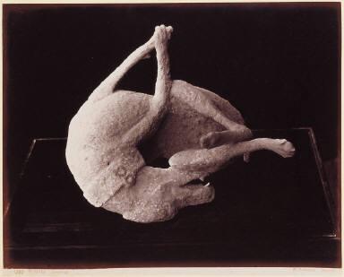Pompeii. Cast of a Dog