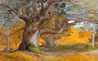 Oak Trees, Lullingstone Park
