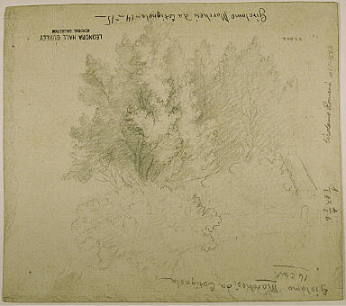 Sketch of Trees and House