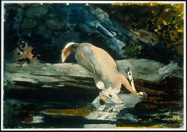 The Fallen Deer