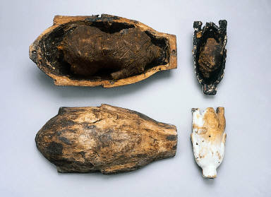 Fowl Case with Mummified Pigeon